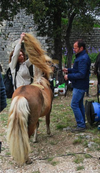 Coiffeur poney